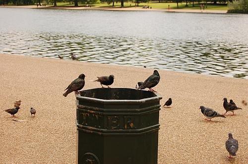 ptaki.jpg