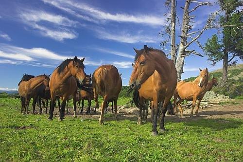 konie.jpg